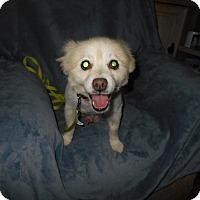 Adopt A Pet :: Shelton - Kannapolis, NC