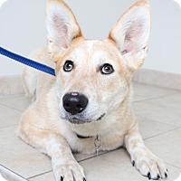 Australian Cattle Dog Mix Dog for adoption in Edina, Minnesota - Zelda (fka Bonnie Blue) D160991: PENDING ADOPTION