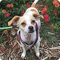 Adopt A Pet :: Oliver - Santa Clara, CA