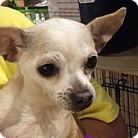 Adopt A Pet :: Precious - Durham, NC