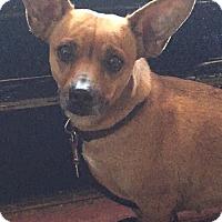 Adopt A Pet :: Peanut - Torrington, WY