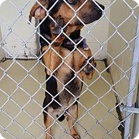 Adopt A Pet :: Gary - Newport, KY