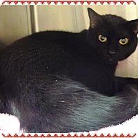 Adopt A Pet :: IZABELL see also LULUBELLE - Marietta, GA
