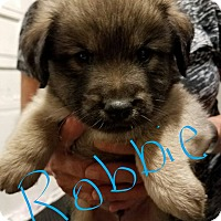 Adopt A Pet :: Robbie - Overland Park, KS