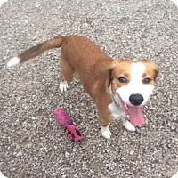 Adopt A Pet :: Major - Port Clinton, OH