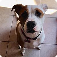 Adopt A Pet :: Liberty - Mission Viejo, CA