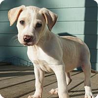 Adopt A Pet :: Tavin - Santa Fe, TX