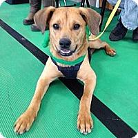Adopt A Pet :: Zelda - Oak Brook, IL