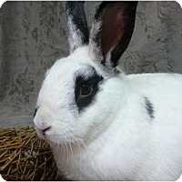 Adopt A Pet :: Preston - Newport, DE
