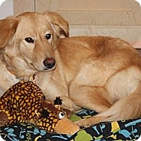 Adopt A Pet :: Lana - Cheshire, CT