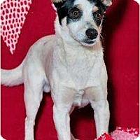 Adopt A Pet :: Wishone - Phoenix, AZ