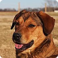 Adopt A Pet :: Dixie - Russellville, KY