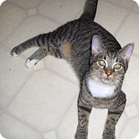 Adopt A Pet :: Anton - Richmond, VA