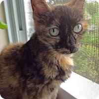 Adopt A Pet :: Duchess - Colmar, PA