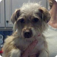 Adopt A Pet :: Deidra - Harrisonburg, VA