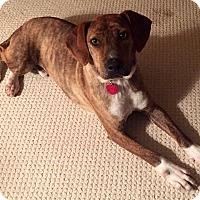 Adopt A Pet :: Jacob - Virginia Beach, VA