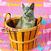Adopt A Pet :: Laurel - Cincinnati, OH
