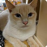 Adopt A Pet :: Oliver - Dallas, TX