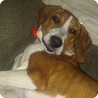 Adopt A Pet :: Rusty - Ijamsville, MD