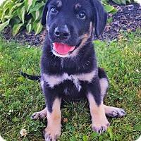 Adopt A Pet :: Rowan - New Oxford, PA