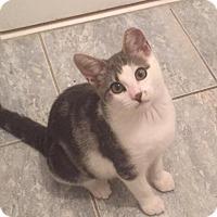 Adopt A Pet :: Cindy - River Edge, NJ