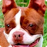 Adopt A Pet :: MISS JOSIE(BEYOND ADORABLE!! - Wakefield, RI