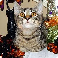 Adopt A Pet :: Basil - Huntsville, AL