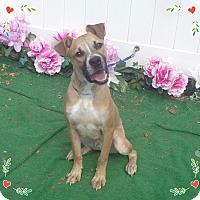 Adopt A Pet :: NICHOLA-see video - Marietta, GA