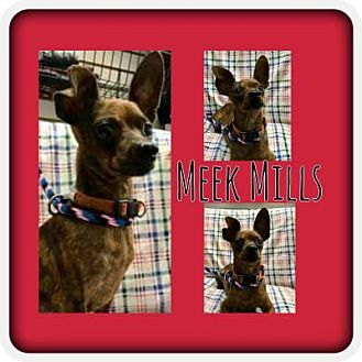 Chihuahua Mix Dog for adoption in Plainfield, Illinois - Meek Mills
