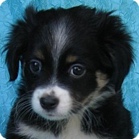 Adopt A Pet :: Snuggle Buns Watkins - Cuba, NY