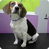 Adopt A Pet :: Addy - Houston, TX