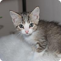 Adopt A Pet :: Venkman - San Jose, CA