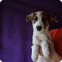 Adopt A Pet :: Diva - Oviedo, FL