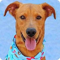 Adopt A Pet :: JB - Louisville, KY