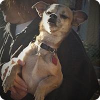 Adopt A Pet :: Ajacks - Palmdale, CA