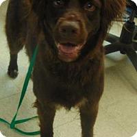 Adopt A Pet :: Ellie Mae - Tulsa, OK
