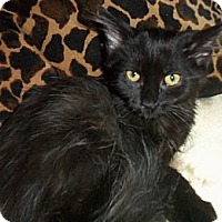 Adopt A Pet :: Shnapps - Sterling Hgts, MI