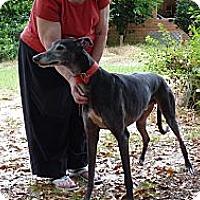 Adopt A Pet :: Maynard - Lexington, SC
