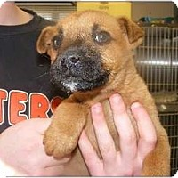 Adopt A Pet :: Cupid - Alexandria, VA