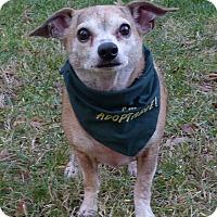 Adopt A Pet :: Potter - Mocksville, NC