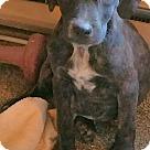 Adopt A Pet :: PEYTON