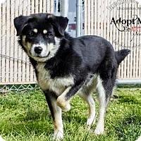 Adopt A Pet :: Thelma - Lincolnton, NC