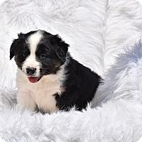Adopt A Pet :: Ripley - Groton, MA