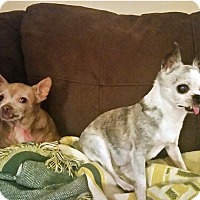 Adopt A Pet :: Joy and Pepe - Durham, NC