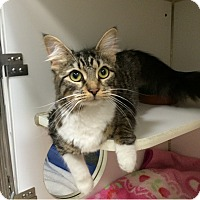 Adopt A Pet :: Mindy - Oakland, NJ