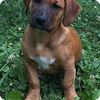 Adopt A Pet :: Paris (ETAA) - Hagerstown, MD