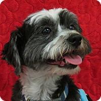 Adopt A Pet :: BOWSER - Eden Prairie, MN