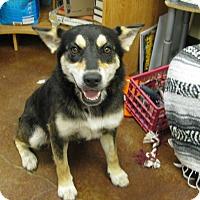 Adopt A Pet :: Maya - Groton, MA