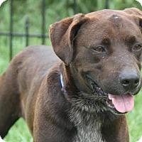 Adopt A Pet :: Hunter - Westminster, MD