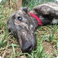 Adopt A Pet :: MAGA ABAZA - Grandville, MI